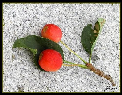"фото ""Fall"" метки: природа, цветы"
