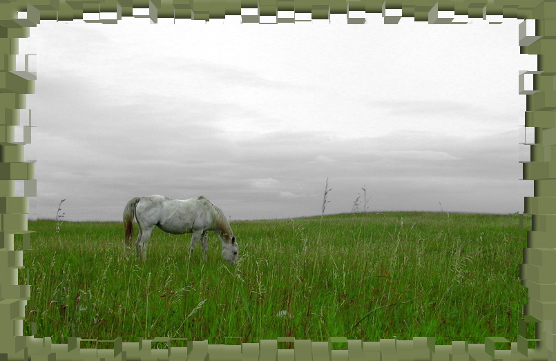 "photo ""Horse in a Field"" tags: nature, pets/farm animals"
