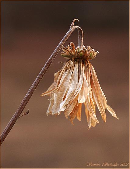 """фото """"Remains of the Summer #2"""" метки: природа, разное, цветы"""