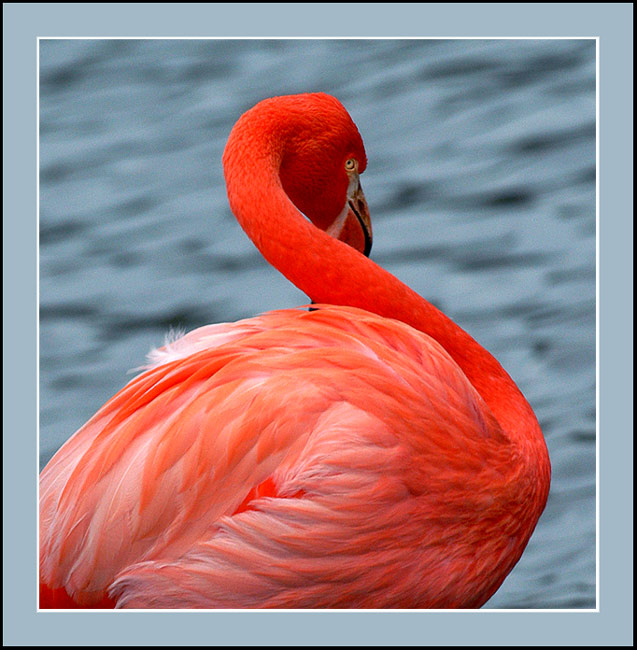 "photo ""ONLY PINK"" tags: nature, wild animals"