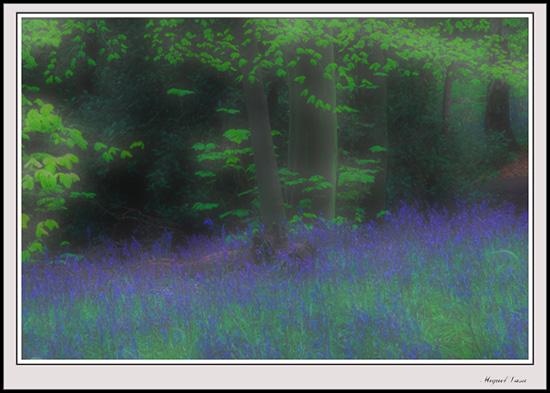 """фото """"Bluebells"""" метки: природа, цветы"""