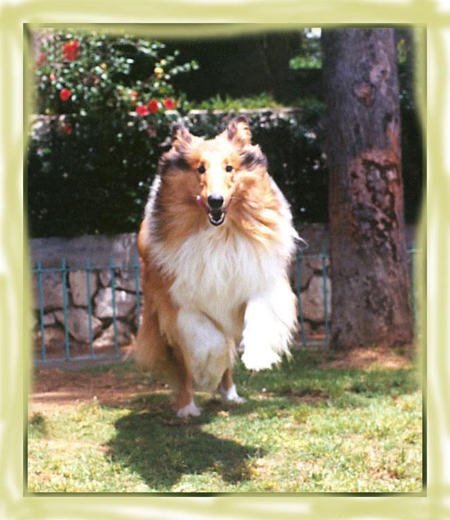 """фото """"прыжок"""" метки: природа, разное, домашние животные"""