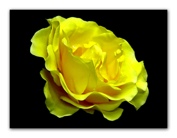 "photo ""Yellow beauty"" tags: misc.,"
