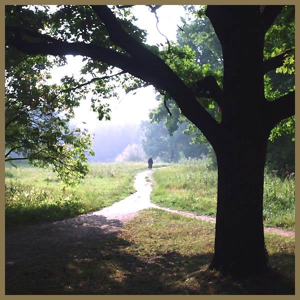 """photo """"ZEN (color variant)"""" tags: landscape, autumn, summer"""