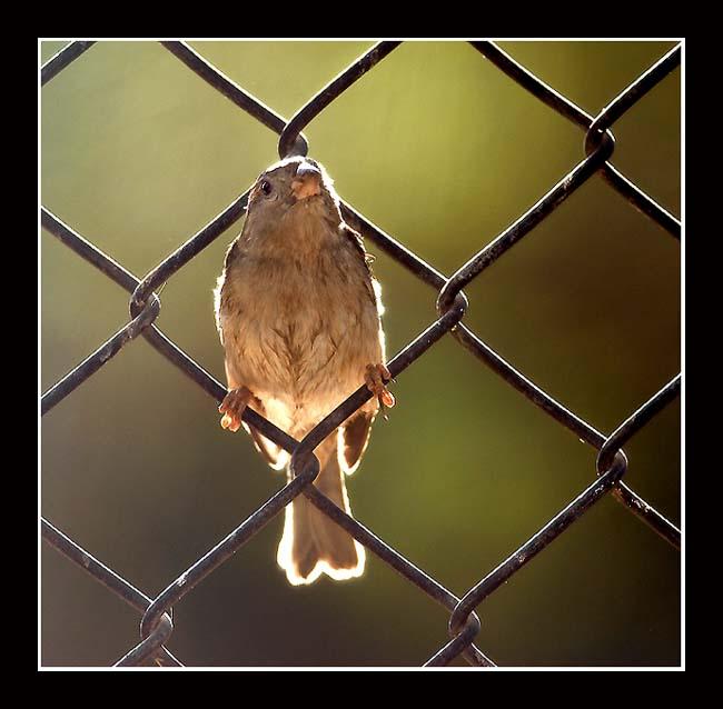 "photo ""ПТАХА"" tags: nature, genre, wild animals"