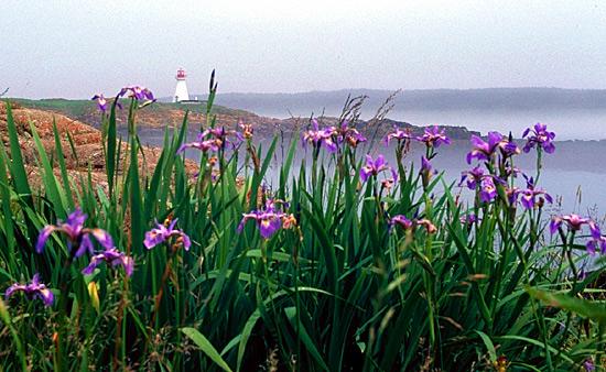 "photo ""Brier Island, Nova Scotia"" tags: landscape, summer"