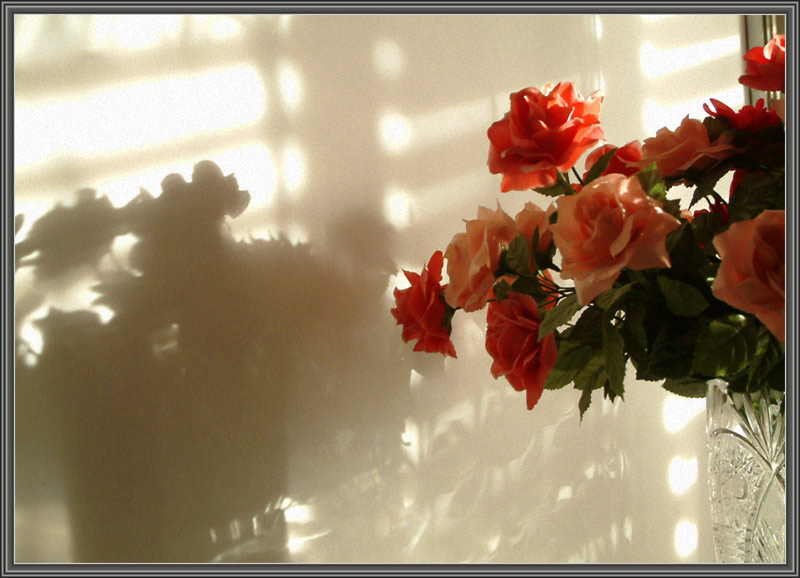 "photo ""Solo for shades"" tags: still life,"