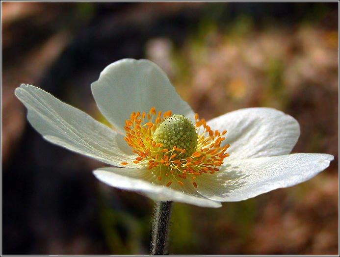 """фото """"**"""" метки: природа, цветы"""