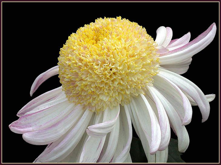 """фото """"Shape and colors ..."""" метки: природа, цветы"""