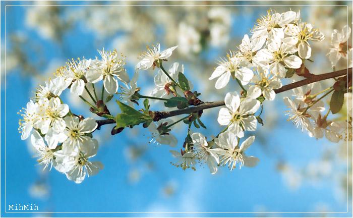 """фото """"Весенний привет"""" метки: природа, пейзаж, весна, цветы"""