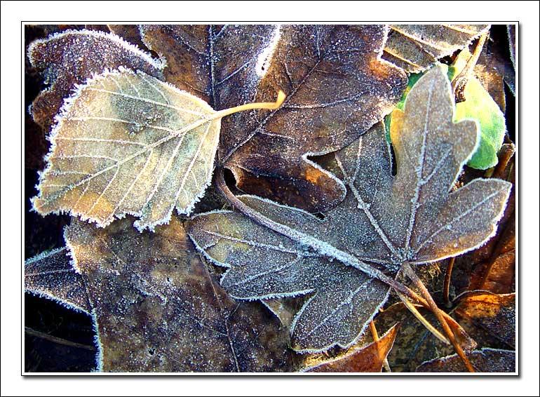 """фото """"Frost and Sunshine"""" метки: природа, макро и крупный план, цветы"""