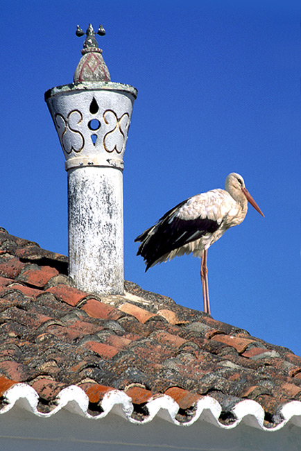 "photo ""Chimney and stork"" tags: misc.,"