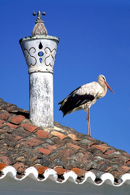 "фото ""Chimney and stork"" метки: разное,"