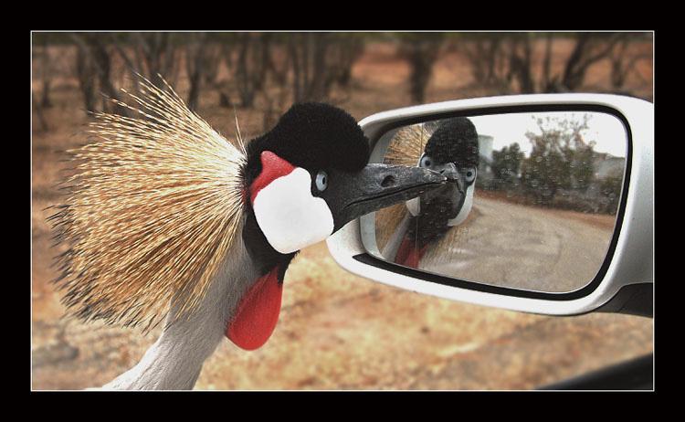 """фото """"Любопытный"""" метки: природа, юмор,"""