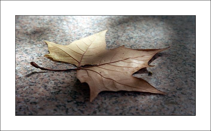 """photo """"Prediction"""" tags: nature, landscape, autumn, flowers"""
