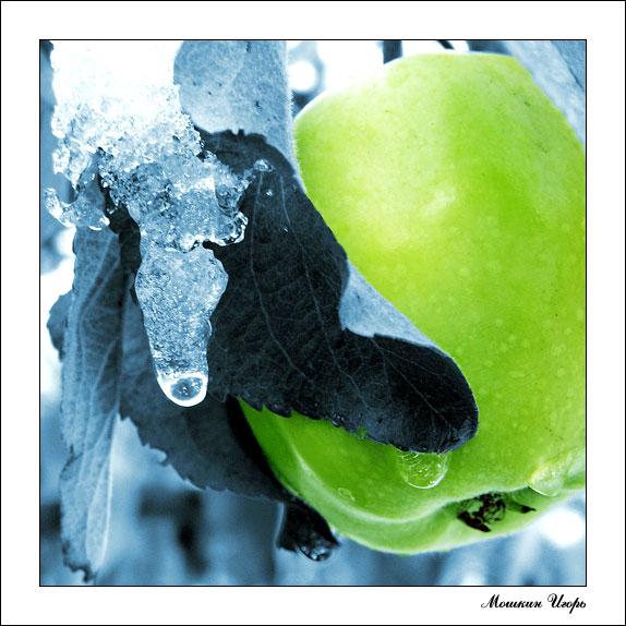 """фото """"Яблоко"""" метки: натюрморт, природа, цветы"""