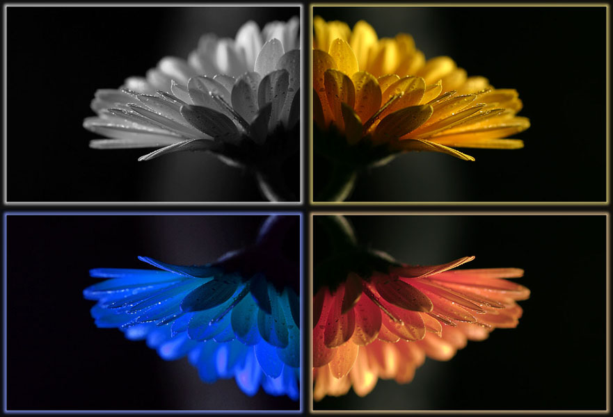 "photo ""Four seasons"" tags: montage,"