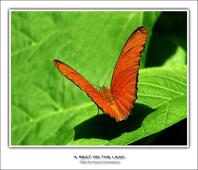 "photo ""A rest on the leaf"" tags: macro and close-up, nature, insect"