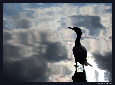 "фото ""Lonely Bird"" метки: природа, домашние животные"