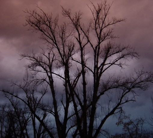 "photo ""Grow dark"" tags: misc.,"