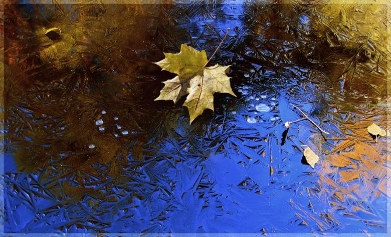 "photo ""Crystal mirror and maple sheet"" tags: landscape, nature, autumn, flowers"