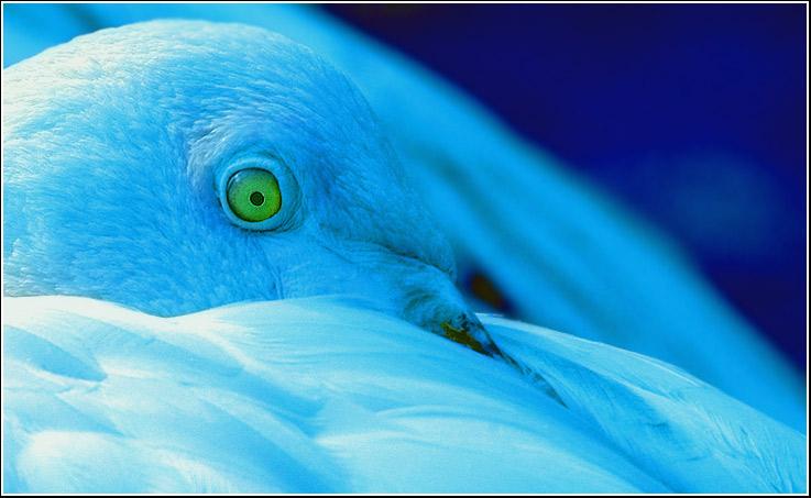 """фото """"SIGHT"""" метки: природа, дикие животные"""