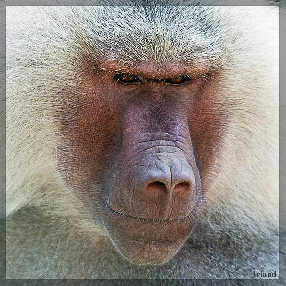 "photo ""Machoman"" tags: portrait, nature, wild animals"