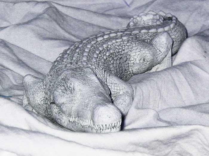 """photo """"Polar crocodile :)"""" tags: macro and close-up,"""