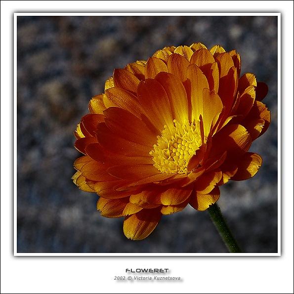"""фото """"Цветочек"""" метки: макро и крупный план, природа, цветы"""