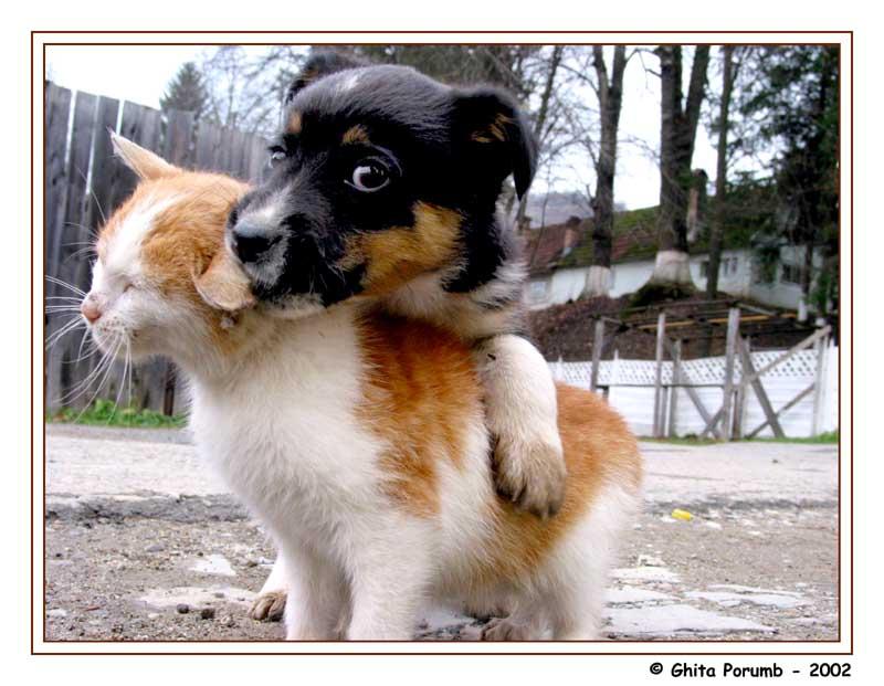 "photo ""Dog & Cat 1"" tags: nature, wild animals"