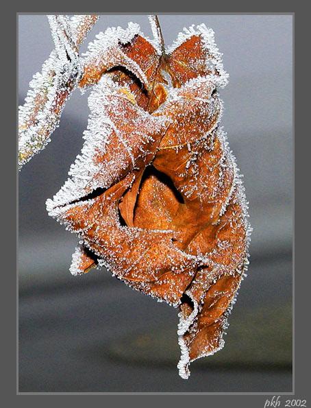 "photo ""Leaf"" tags: nature, flowers"