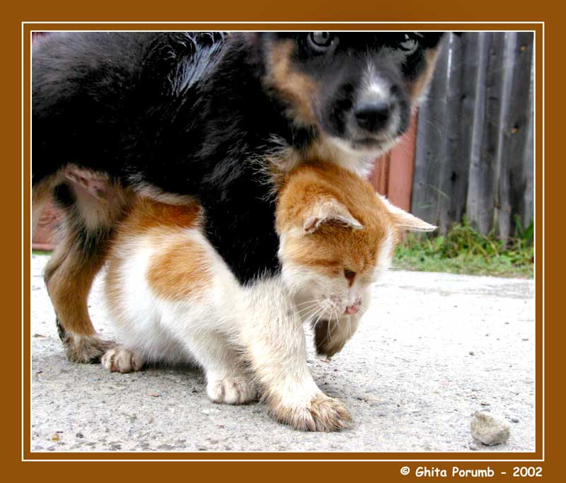 "photo ""Dog & Cat 2"" tags: nature, wild animals"