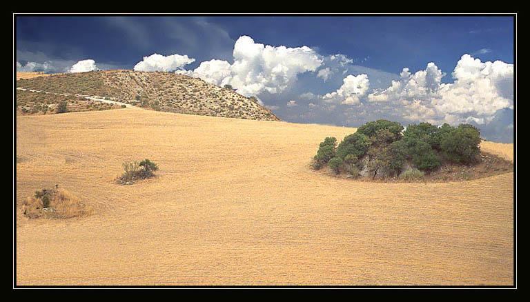 """фото """"Б/Н"""" метки: пейзаж, осень"""
