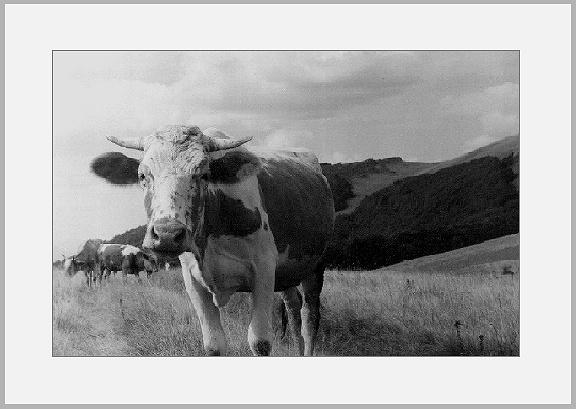 """photo """"Portret"""" tags: portrait, nature, pets/farm animals"""