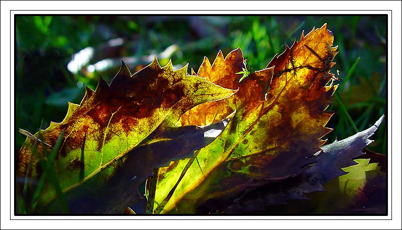"""фото """"Light"""" метки: природа, макро и крупный план, цветы"""