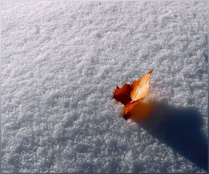 "photo ""Autumn flame"" tags: landscape, autumn, winter"