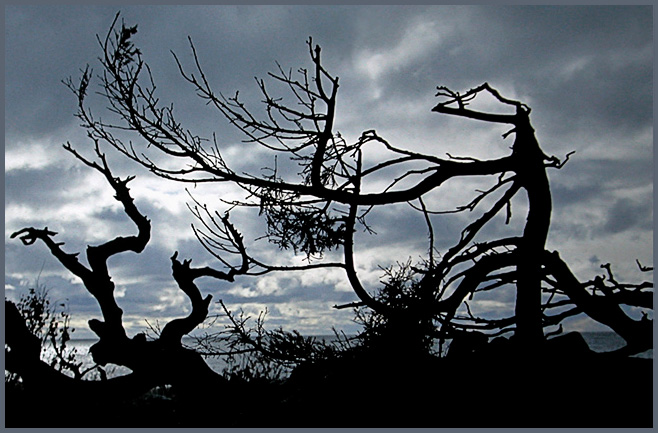 "фото ""Упрек небесам (после лесного пожара)"" метки: пейзаж, лес"