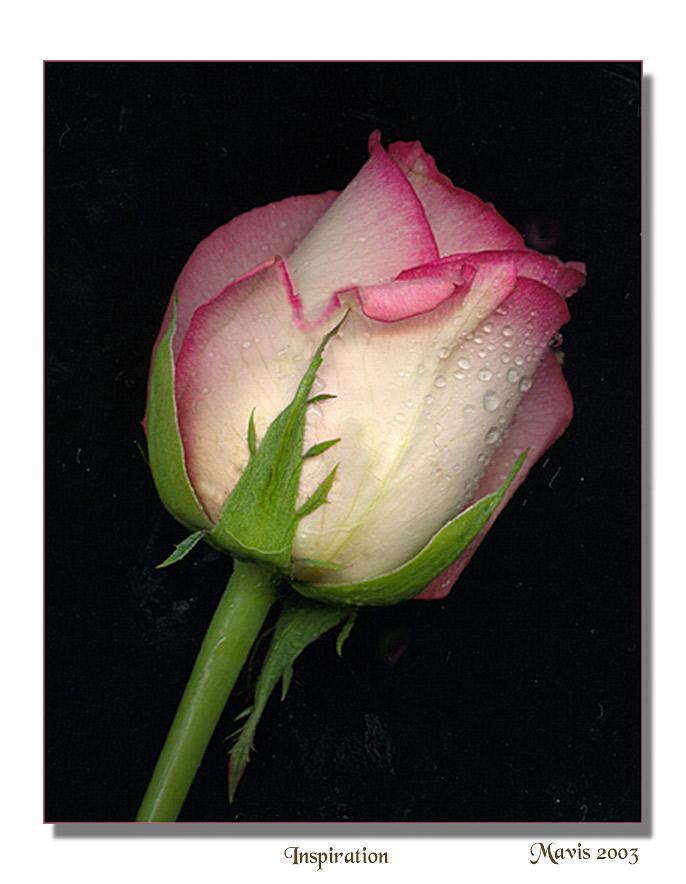 """фото """"Inspiration"""" метки: фотомонтаж, природа, цветы"""