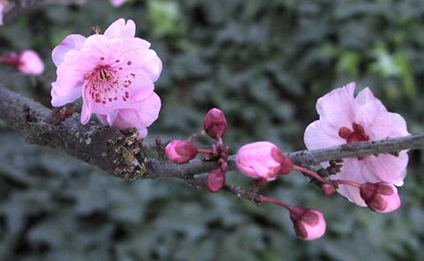 "фото ""Winter Blossoms"" метки: макро и крупный план,"