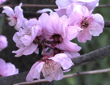 """фото """"Fruit Blossom"""" метки: макро и крупный план,"""