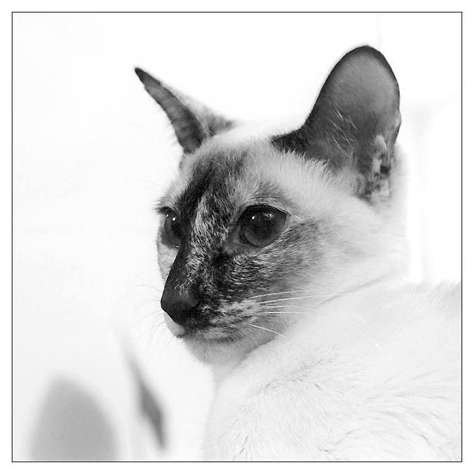 """фото """"Портрет домашнего животного"""" метки: природа, черно-белые, домашние животные"""