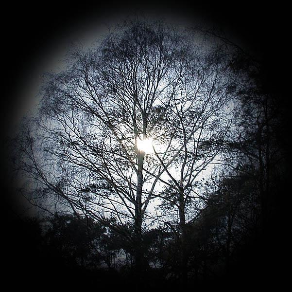 """фото """"Живое..."""" метки: пейзаж, природа, лес"""