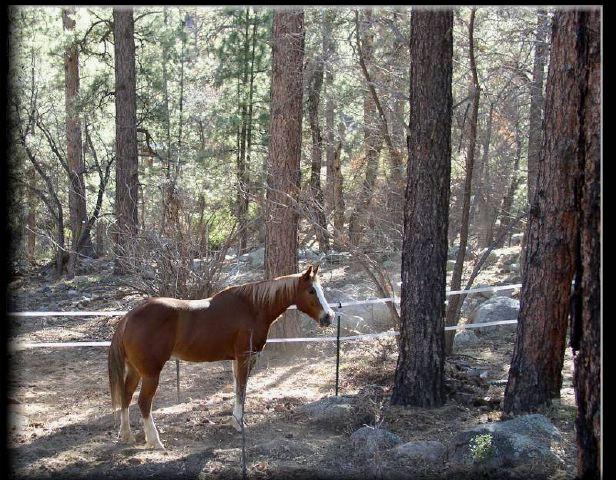 "фото ""Watcher in the Woods"" метки: природа, пейзаж, домашние животные, лес"