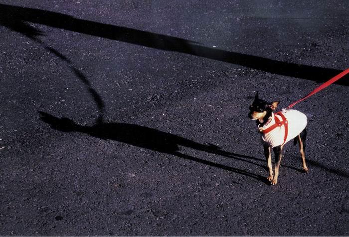 "фото ""Roza loves to walk"" метки: природа, домашние животные"