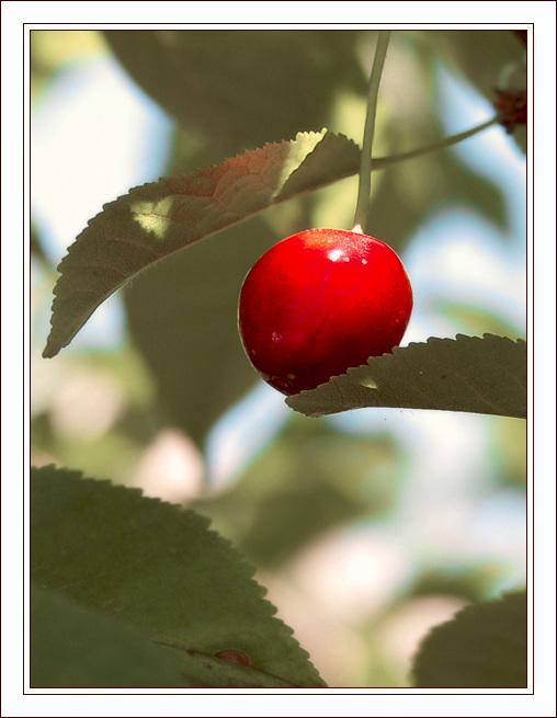"""фото """"Вишенка для релаксации"""" метки: макро и крупный план, природа, цветы"""