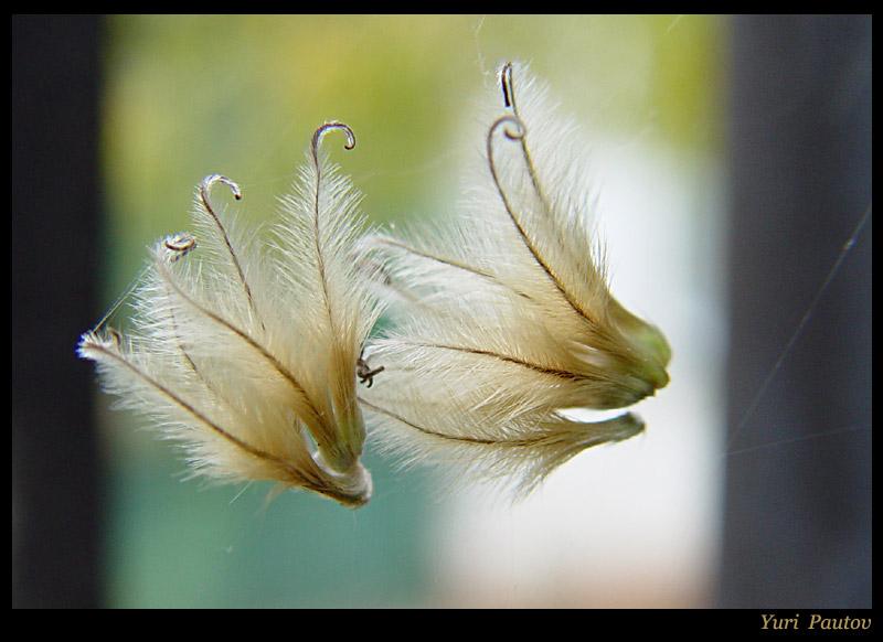 """фото """"В сети..."""" метки: природа, цветы"""