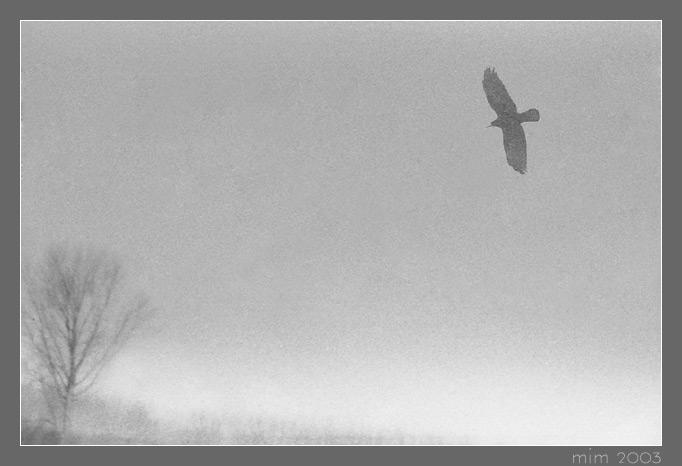 "фото ""Hunting"" метки: природа, дикие животные"