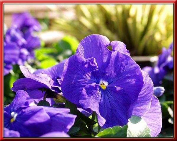 """фото """"Настроение на завтра !!!"""" метки: природа, макро и крупный план, цветы"""