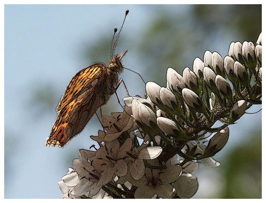 "фото ""бабочка"" метки: разное,"