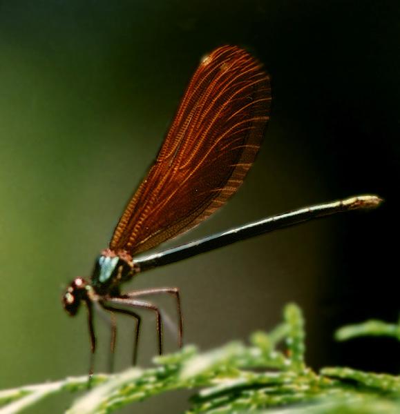 """фото """"Small world..."""" метки: макро и крупный план, природа, насекомое"""
